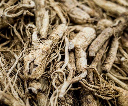 Benefits of Ginseng